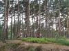 tabor2007-617